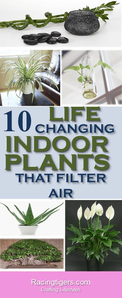 10 AIR PURIFYING INDOOR PLANTS ANYONE CAN GROW:DIY - HomeDecor - HousePlants - IndoorPlants - SmallHousePlans - BestIndoorPlants - Aircleaner - SsucculentPlants