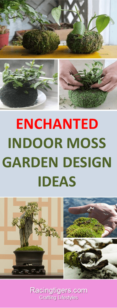 WHY HOME GARDEN DESIGN IDEAS ARE ON CRACK ABOUT INDOOR MOSS GARDEN DESIGN  IDEAS: #